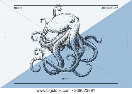Hand-drawn Image Of An Octopus On A Light Background. Ocean Animal. Retro Picture For The Menu Of Fi