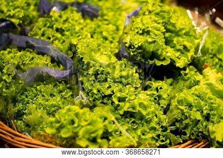 Green Organic Hydroponic Iceberg Lettuce Isolated . Organic Iceberg Lettuce Is A Farmed Vegetable Gr