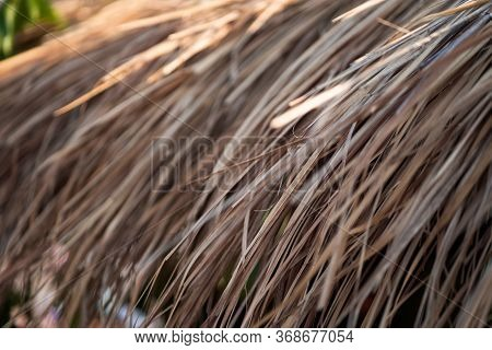 Thatch Roof Background, Hay Or Dry Grass Background. A Thatched Roof, Hay Or Dry Grass Background. G