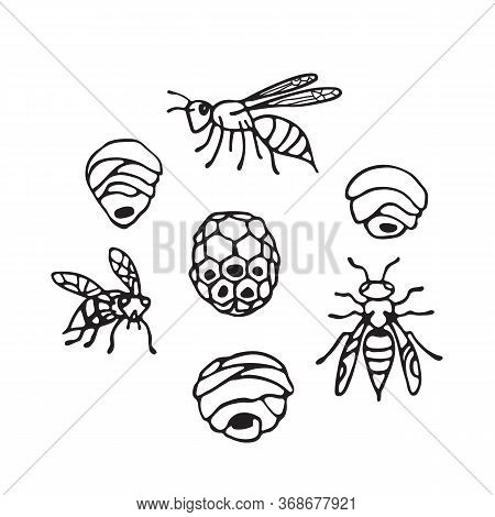 Collection Of Wasps And Wasp Nests Isolated On White Background. A Stinging Insect. Hand Drawn Style