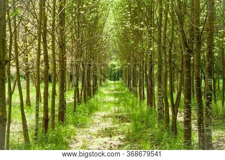 Beautiful Green Path Through The Tree Line