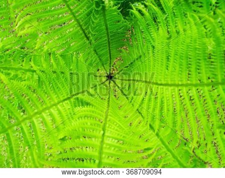 Photo Of Green Leaves Of Fern Top View.