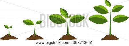 Stages Of Cultural Development. Infographics Of Tree Planting. Concept Of Evolution. Sprout, Plant,