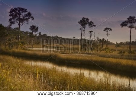 Marshland And Swampy Area Of Northern Florida Near The St. Marks River In Tallahassee, Florida.