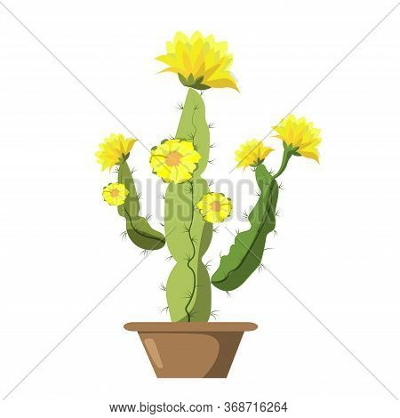 Blooming Cactus On A Bright Background. Modern Card Design. Vector Illustration In Cartoon Style.