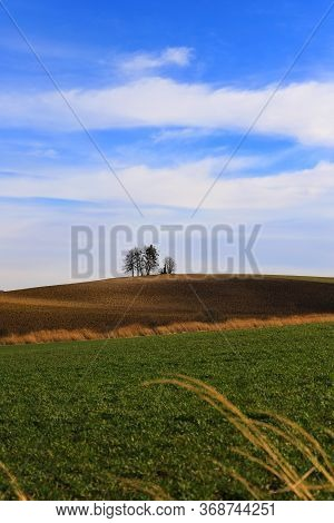 Memorable Linden Tree On A Hill, Green Field, Blue Sky With White Clouds