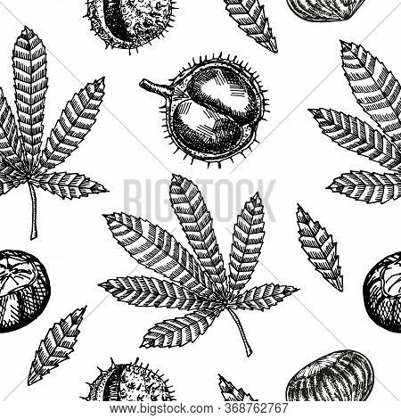 Seamless Pattern With Chestnuts And Autumn Leaves. Seamless Pattern With Chestnut Leaves On An Isola