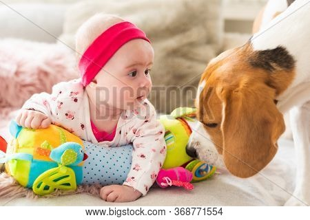 Cute Baby Girl Looking At Beagle Dog. Closeup, Shallow Dof. Pets With Babies Concept