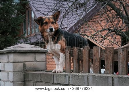 Dog Look At Outside On The Fence