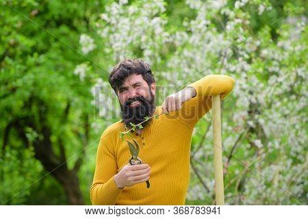 Spring. Smiling Man In Garden. Plants. Garden Scissors. Gardening. Eco-farm. Work In Garden. Bearded