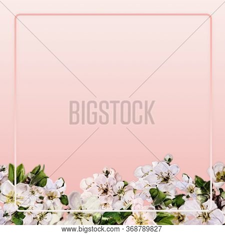 Square Pink Banner With Apple Tree Flowers And A Delicate Frame.