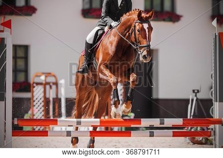 A Beautiful Sorrel Racehorse With A Rider In The Saddle Jumps Over The Red Barrier At A Show Jumping