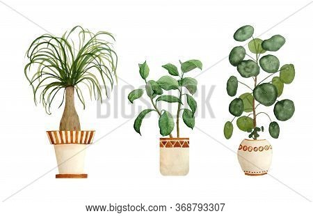 Watercolor Hand Drawn Illustration Elements Of Ponytail Palm, Ficus Rubber Plant, Pilea Chisenese Mo