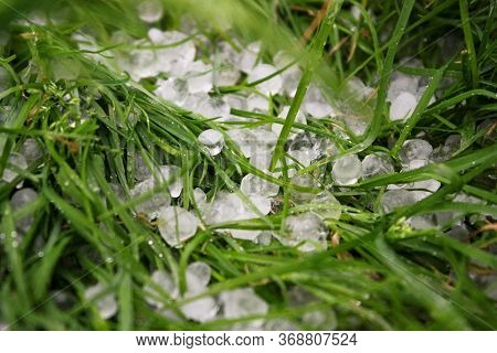 Hail On Green Green Grass. Snow Pellets On The Ground. A Violent, Dangerous Storm With Hail.