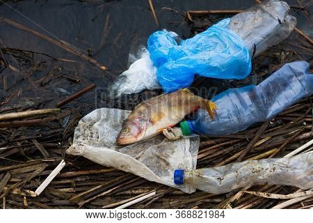 Dead Fish With Plastic Trash On The Ocean. Concept For The Protection Of Marine Life And Oceans. Ter