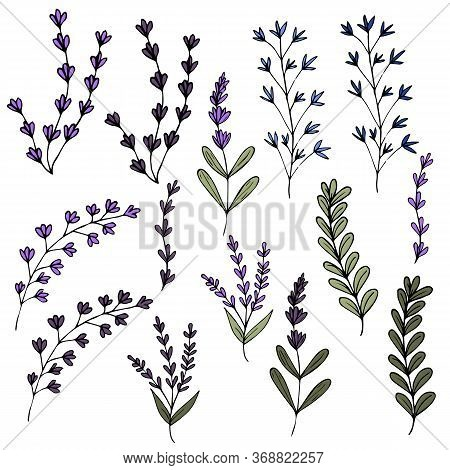 Set Of Twigs Of Purple Lavender And Herbs.