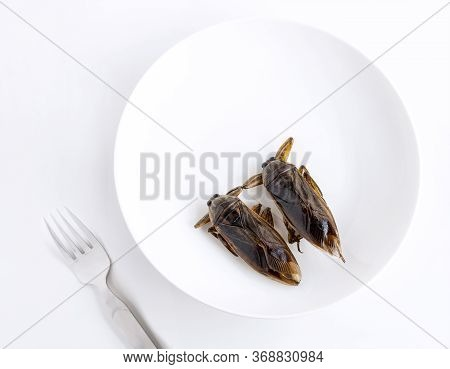Giant Water Bug Is Edible Insect For Eating As Food Insects Cooking Deep-fried Snack On White Plate