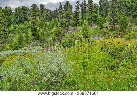 Picturesque Summer Landscape Of Blooming Alpine Meadow With Blue Aquilegia, Orange Trollius Asiaticu