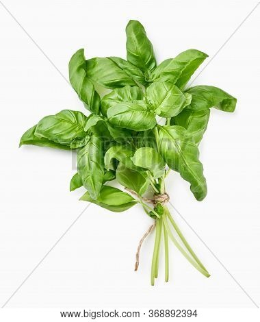 Green Fresh Basil Isolated On White. Top View Of Basil Leaves.