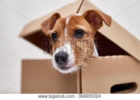 Dog In Delivery Cardboard Box. Pet As A Gift