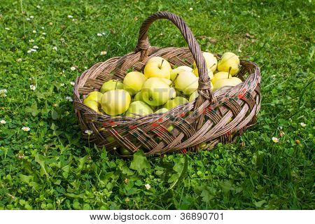 Basket With Apples On Grass