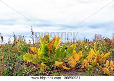 Autumn Yellow Plant And Different Herbs On The Meadow. Wildflower Meadow, Flower Meadow, Wildflowers