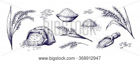 Hand Drawn Rice. Organic Cereal In Bag And Rice Porridge In Bowl, Sketch Doodle Set Of Wild Jasmine