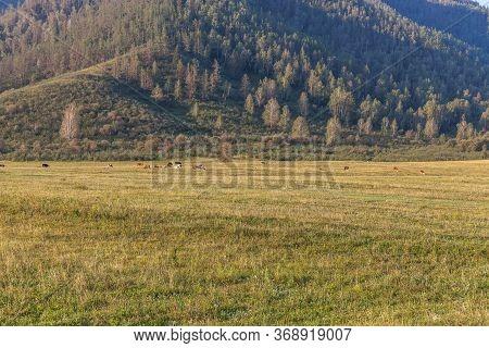 Summer In Altai Russia, Mountain Altai, Altai Republic. Beautiful Summer View. Mountain Scenery, Mou