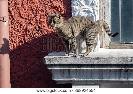 Gray Stray Cat Is Wandering On The Window Sill