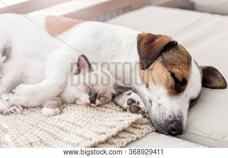 Dog and cat resting together. Dog and kitten friends sleeping