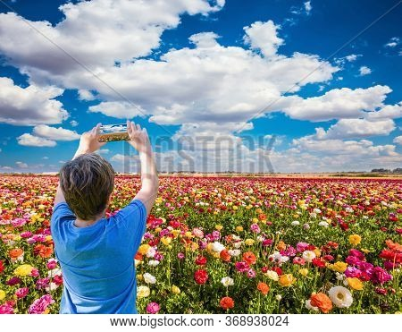 Spring flower fields of garden buttercups - ranunculus. Teenager in a blue T-shirt photographs on a mobile phone. The concept of botanical, environmental and photo tourism