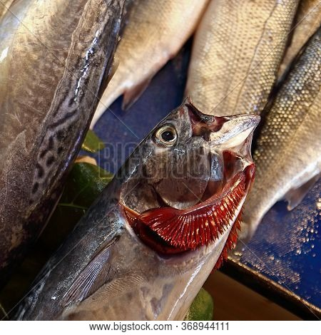 Raw Fresh Fish With Red Gills At The Street Market. Mackerel With Splayed Gills. Close Up, Selective