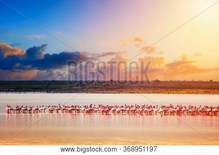 Beautiful Sunset In Kenya Amboseli National Park With Lake And Flamingos. Lesser Flamingo Phoenicona