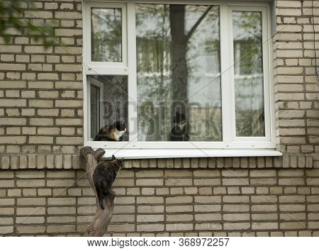 An Open Window, One Cat Sits On The Windowsill Of The Window Of The Apartment Building, The Second C