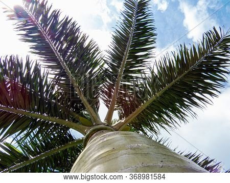Below View Of A Palm Tree From The Inside Of The Ancient Mayan City Of Tulum In Quintana Roo, Mexico