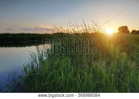 Summer Sunset On The River. Beautiful Nature. Green Young Grass. Calm Water In The River. Bulrushes