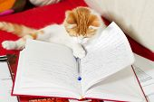 Small cat is learning for exam from open book poster