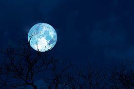 Blue Moon Back Silhouette Soft Cloud Dry Branck Tree On Night Sky