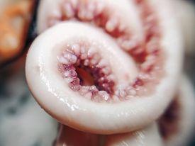Delicacy Octopus Tentacle Feeler Seafood Food Animal Macro Photo