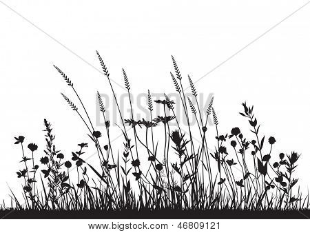 vector wild herbs and flowers silhouette background