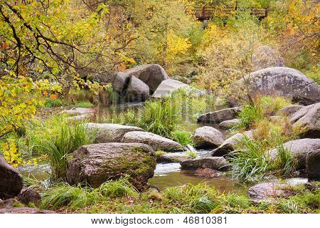 Autumn Forest With The River