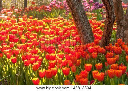 Schöne Frühlingsblumen