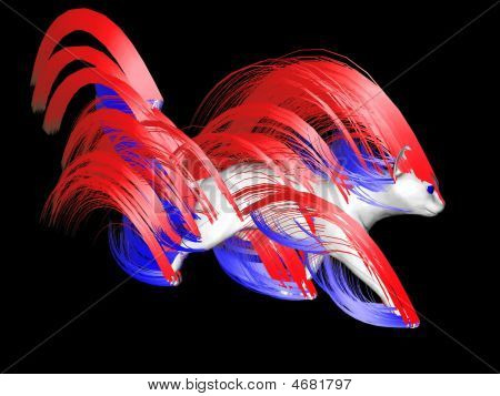 white patriotic cat with gorgeous flowing hair the color of the united states of America flag. poster