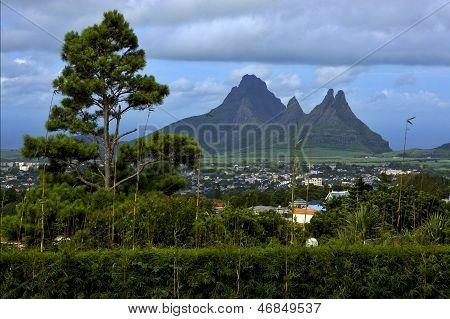 Cloudy Mountain Plant