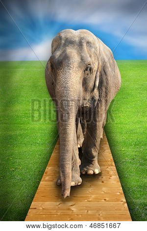 Concept With Elephant