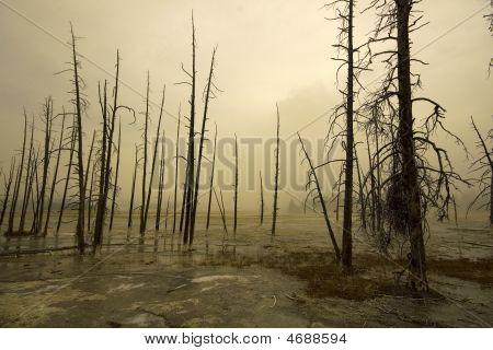 Yellowstone Foggy Landscape