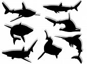 Shark family silhouettes in different poses and attitudes poster