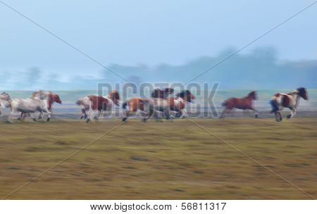 blurred motion of many galloping horses outdoors poster
