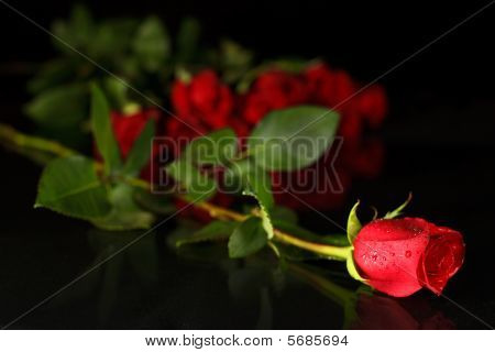 Red Rose Solitaire blur background
