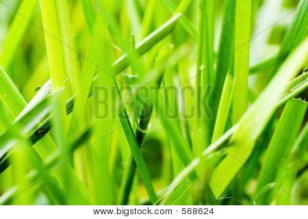 Grass Macro